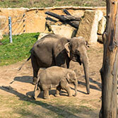 A Joint Ticket for a Cruise and Admission to the Zoo - Reduced Price