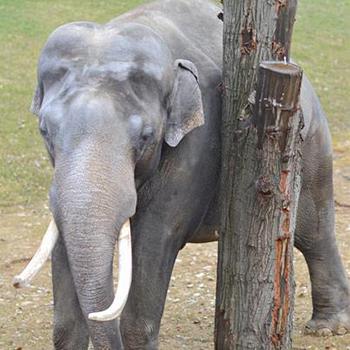Summer Weekend in Zoo